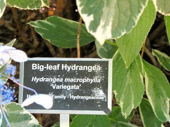 Coker Arboretum: Typical signage