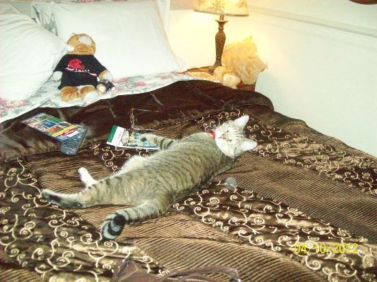 1 Murray House Bed & Breakfast: Happy kitty
