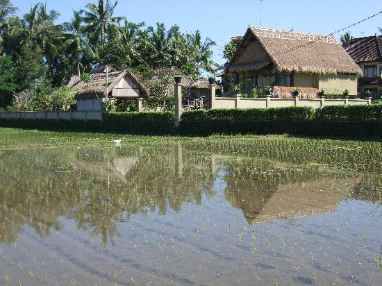 Villa Puri Darma Agung: Villa