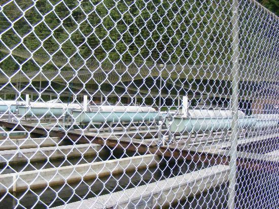 Capilano Salmon Hatchery: outdoor hatcheries
