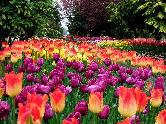 Roozengaarde Display Garden: Gorgeous Setting