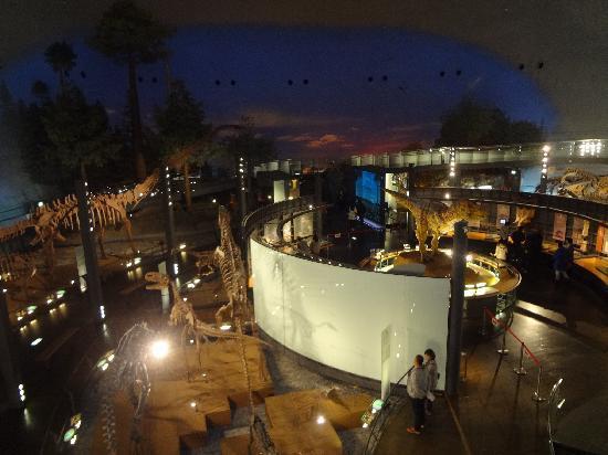 Fukui Dinosaur Museum: メインエリア