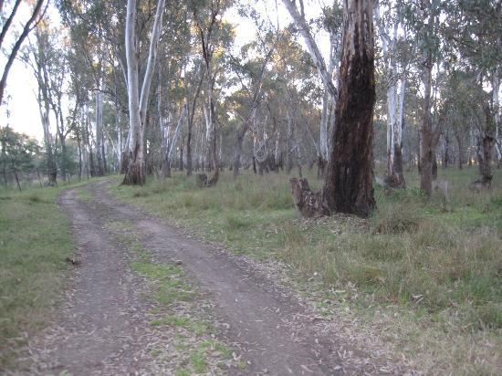 Rivergum Holiday Retreat: The walking track back to toilets