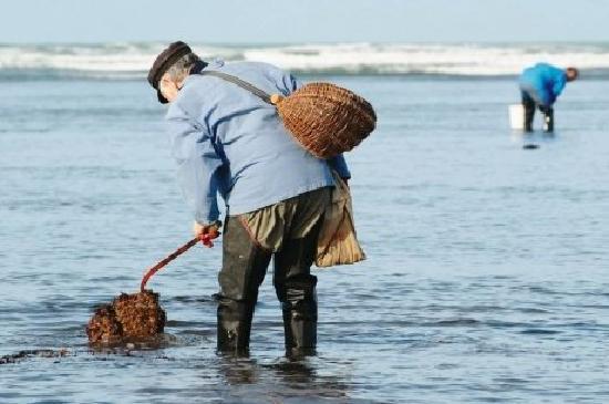 Maison d'hôtes La Côte d'Argent : vacances à la mer