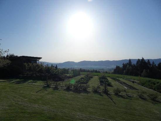 Sakura Ridge - The Farm and Lodge: Amazing view