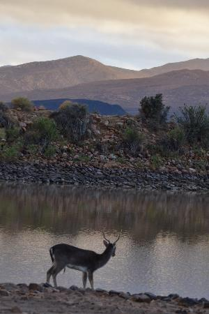 Inverdoorn Game Reserve Safaris: Morning by the lake