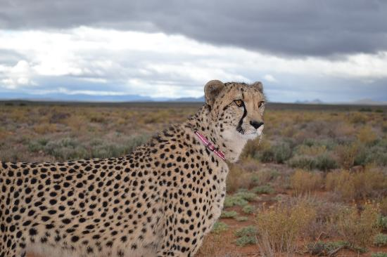 Inverdoorn Game Reserve Safaris: Walking with Velvet