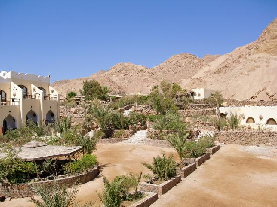 The Bedouin Moon Hotel: Pool and gardens