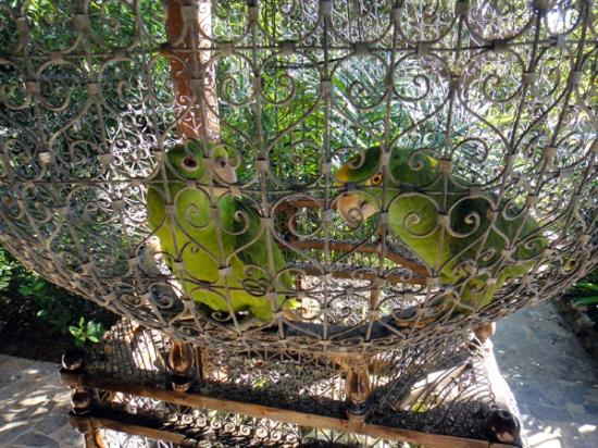 La Giralda: The parrots!
