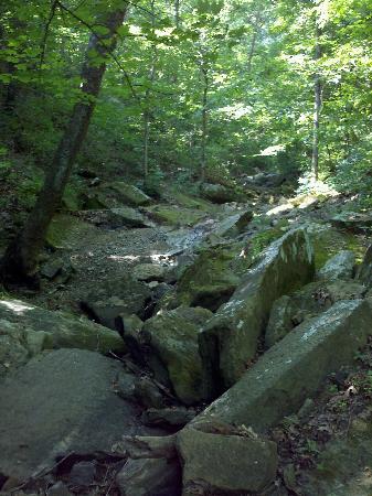 Lost Trail Cabins : Hiking Big Rock Creek