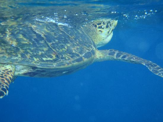 West Bay Tours - Private Tours: Snorkeling Cayos Cochinos