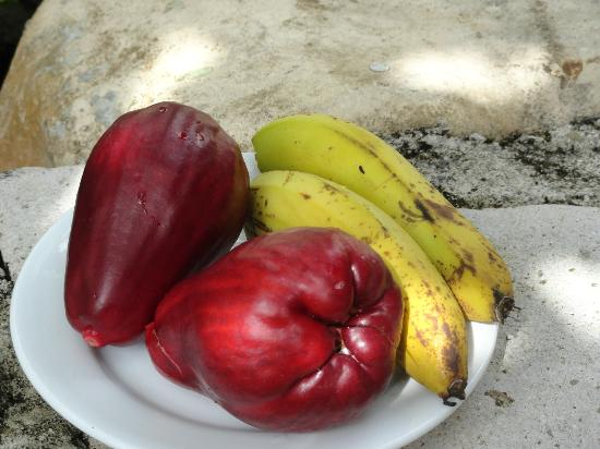 Pimento Lodge Resort: Fresh picked fruit for our trip back to Montego Bay. Courtesy of Lloyd