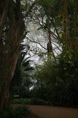Highgrove House: Misty morning at Highgrove