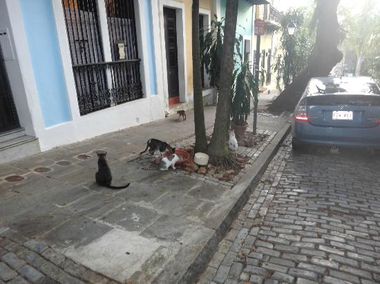 ‪كاليتا 64 أبارتمنتس: Some cats outside of the apartment
