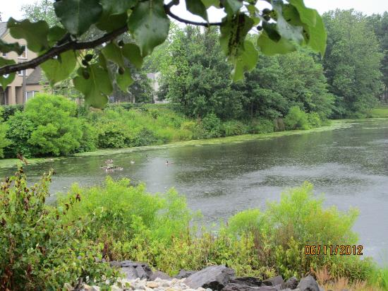 Candlewood Suites Philadelphia / Willow Grove : Pond behnd motel