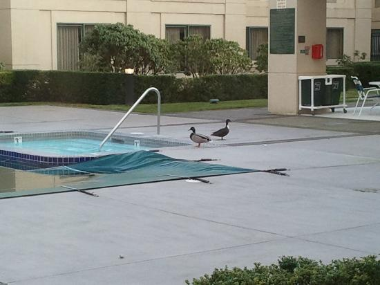 Country Inn & Suites By Carlson, Bothell: The Country Inn ducks!
