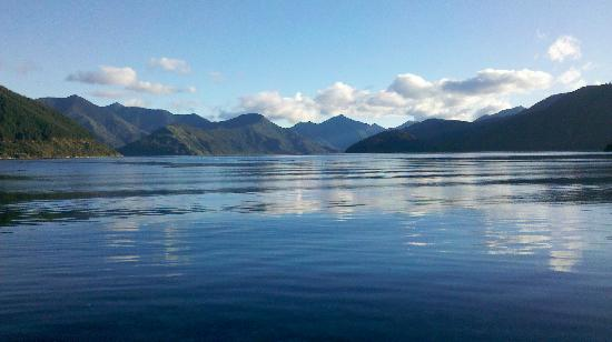 Pelorus Mail Boat: A beautiful calm day in Pelorus Sound