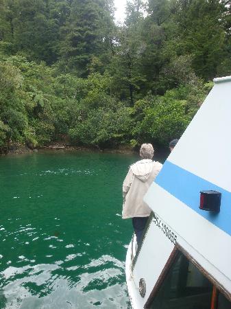 Pelorus Mail Boat: Dillon Bell reserve Pelorus Sound