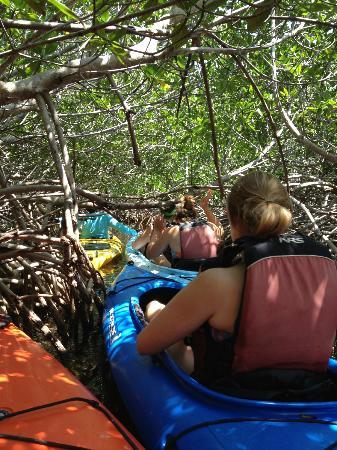 Big Pine Kayak Adventures: In the Mangroves