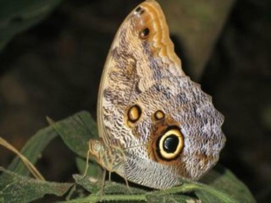 La Cusinga Eco Lodge: Cool moth on hiking trail
