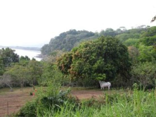 La Cusinga Eco Lodge: Jungle and ocean views - plus toucans in distance