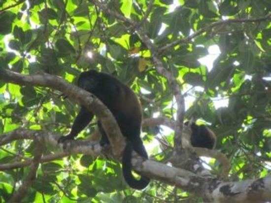 La Cusinga Eco Lodge: monkey