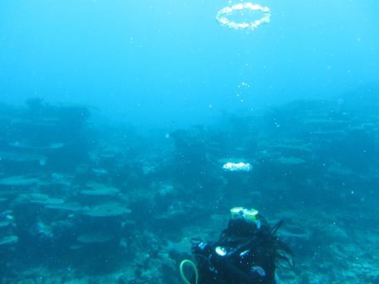 Coral Quays Fish & Dive Resort: Ian's air-ring trick