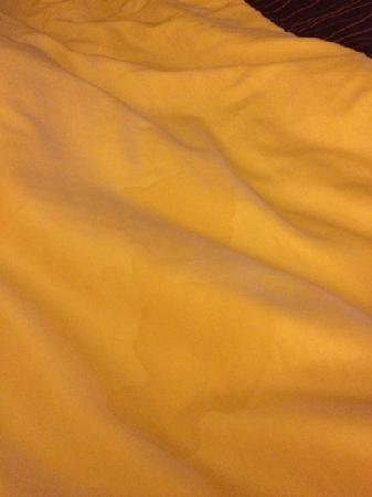 BEST WESTERN Ocala Park Centre: huge gross stain on comforter!