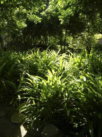 Paresa Resort Phuket : Lush greenery