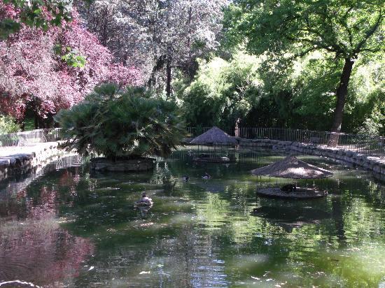 Fuente fotograf a de jardines del campo del moro madrid for Jardines 15 madrid