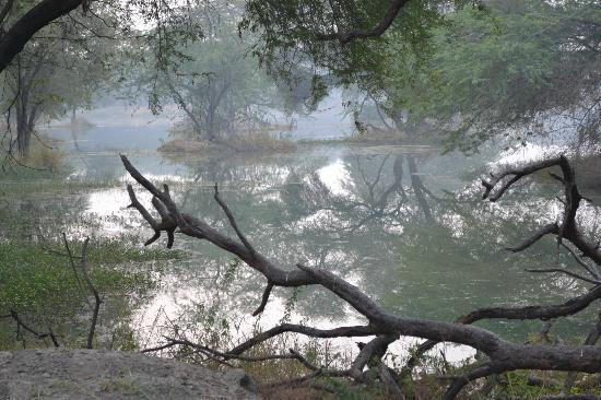 Sultanpur National Park Bird Sanctuary: pond