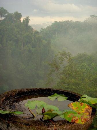 Villa Awang Awang: Misty morning