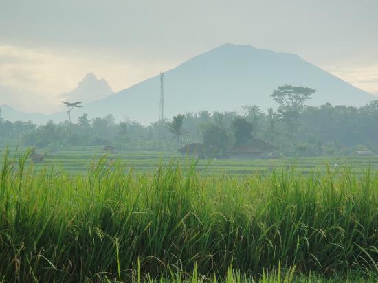 Villa Awang Awang: Morning walk