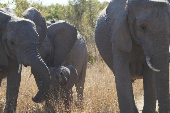 Shindzela Tented Camp: You don't want to skip a drive