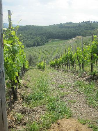 Vinarium: One of the vineyards.