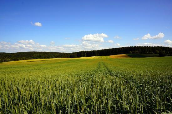 Graether Gesundheitsresort: Landschaft in Gehdistanz (Juni-Vegetation)