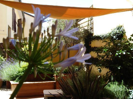 B&B Guerrazzi: Terrace viewed from the Agapanthus
