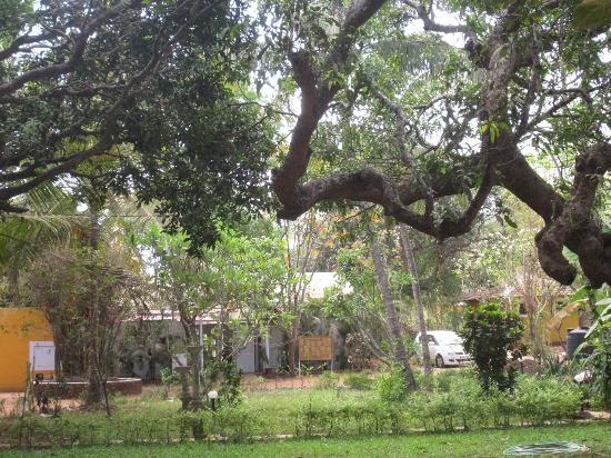 Hotel Bougainvillea - Granpa's Inn: the grounds are filled with mature trees