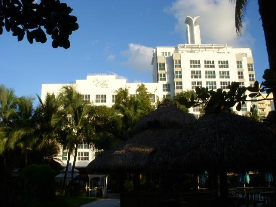 The Palms Hotel & Spa: hotel beach side