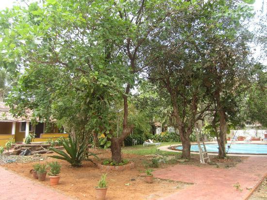 Hotel Bougainvillea - Granpa's Inn: the grounds are well maintained