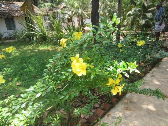 Hotel Bougainvillea - Granpa's Inn: the flowers are in bloom