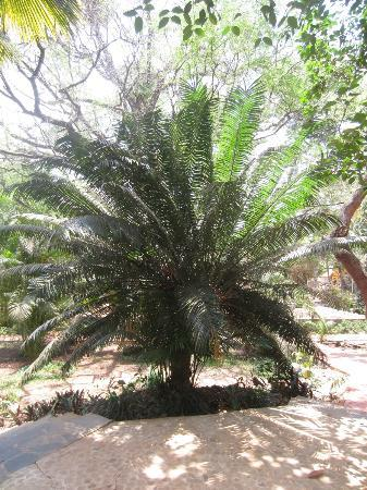 Hotel Bougainvillea - Granpa's Inn: lovely greenery
