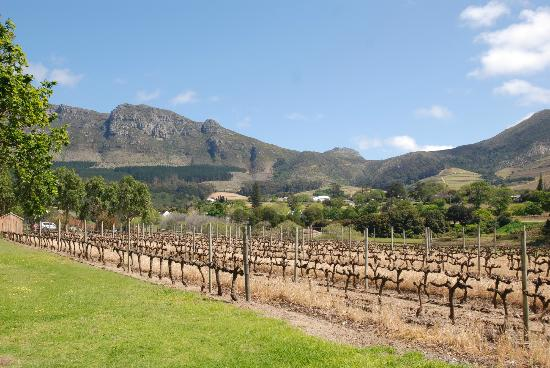 Constantia Uitsig Country Hotel 사진