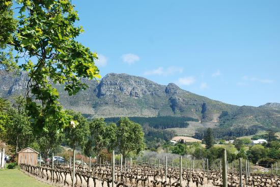 Constantia Uitsig Country Hotel: View
