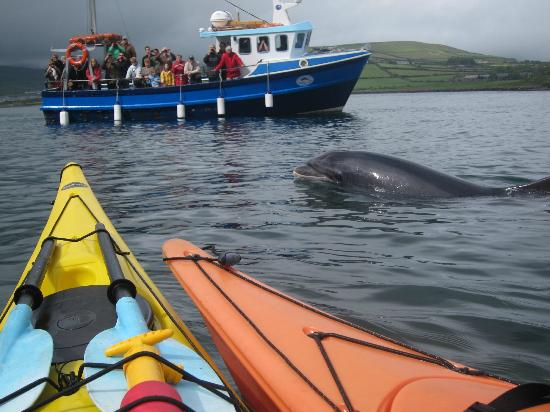 Irish Adventures: Kayaks get a much better view than the boats!