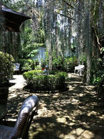 Antebellum Guest House: Beautiful moss