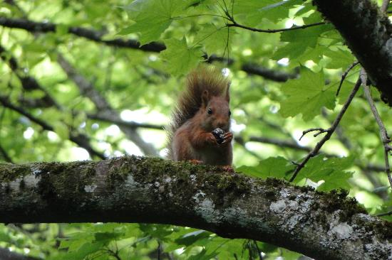 B & B of the Marcs d'Or : Lovely red squirrels