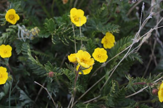 Rocky Mountain Conservancy Tours: Tundra Flowers