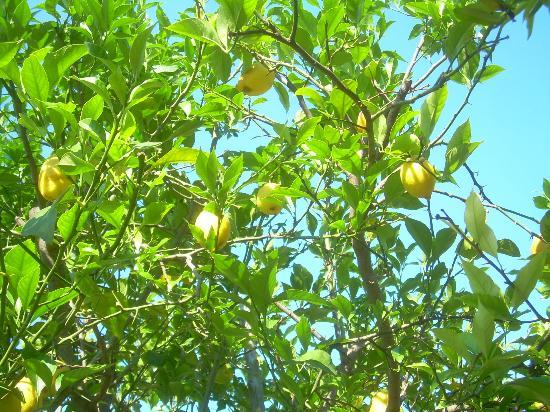 La Marticana : Gli alberi da frutto