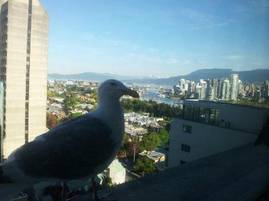 Holiday Inn Vancouver Centre: View from our hotel room (we were photobombed by a seagull...)